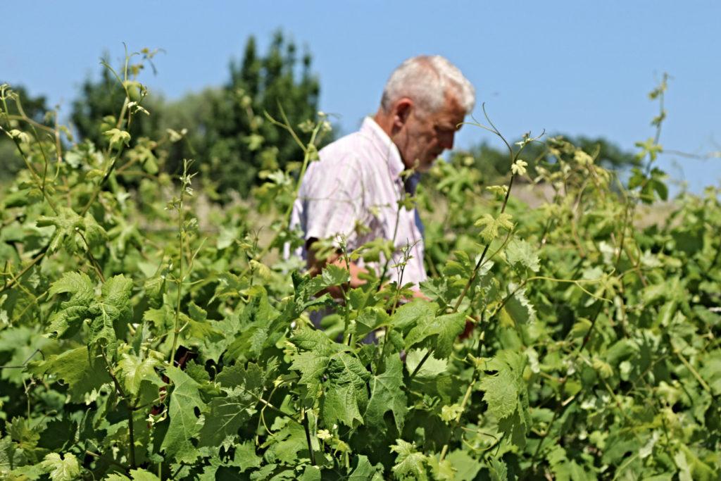 Le vigneron du domaine de l'Horte André Alingrin