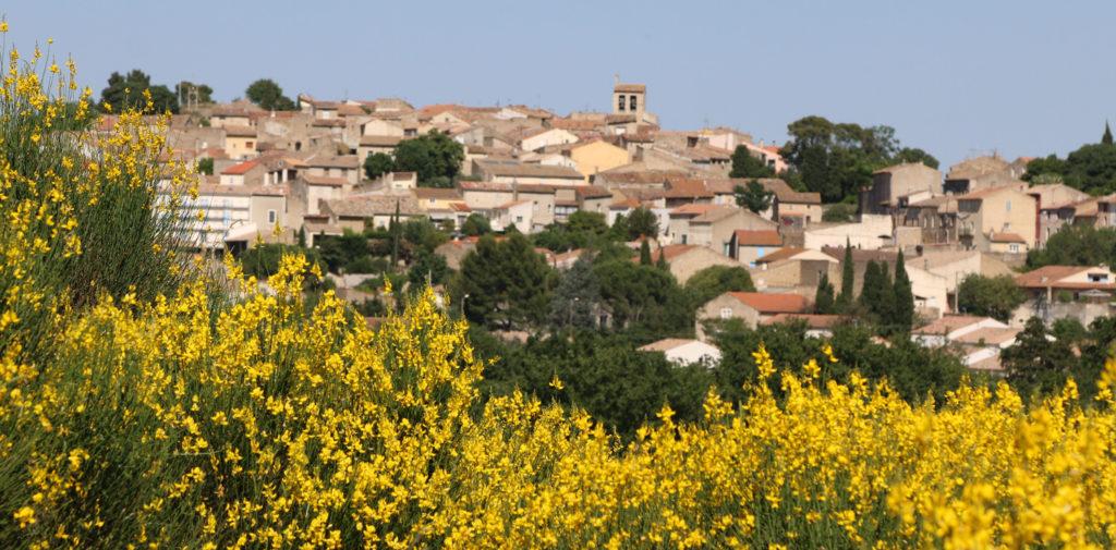 Trouver les vins du Domaine de l'Horte